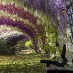 نفق الزهور في اليابان