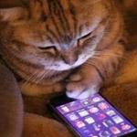 حتى القطط غيرت هواياتها!