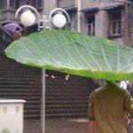 مظلة طبيعية