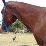 جمعية مختصة برعاية الخيول انقذت هذا ا...