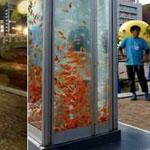 تحويل الكابينه العامة للاتصالات في اليابان الى احواض سمك رائعة بسبب الهواتف المحمولة
