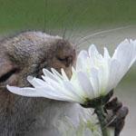 رحيق الزهور و إحساس عميق يخطف الروح س...
