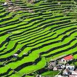 مزارع الأرز في الفلبين