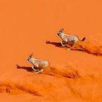 ولله في خلقه شؤون....جمال الصحراء