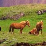 صورة طبيعية من احد المزارع فى آيسلندا