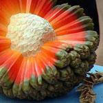 فاكهة الهالة Hala Fruit من هاواي