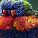 ألوان خلابة ورائعة