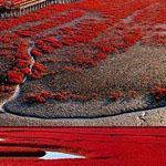 الشاطئ الأحمر ، بانجين - الصين