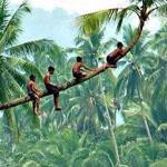 تسلق الأشجار وسحر وجمال الطبيعة الخلاب في إندونيسيا