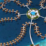زهرة المحيط في جزر المالديف