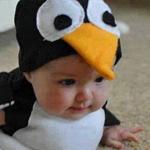 البطريق الصغير