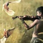 الطيور ترقص على عزف الكمان