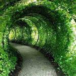 النفق الأخضر - حديقة القلعة، المملكة المتحدة