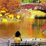 جلسة هادئة في حديقة سنترال بارك في ني...