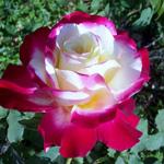 ممكن لزهرة واحدة ان تكون حديقتي وصديق واحد ان يكون عالمي