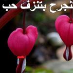 زهرة الحب النقي