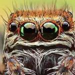 هل تعلم انه يوجد اكثر من 40000 نوع من العناكب في العالم