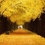 صورة رائعة من المانيا الطريق الذهبي