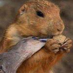 الرحمه بين الحيوانات وتقاسم الطعام في...
