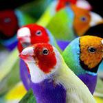 مجموعه من الطيور الملونه رفى غايه الجمال