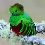 اجمل طيور العالم