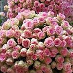 يا لسحر وجمال الورد