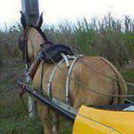 تاكسي حديث بدون بنزين