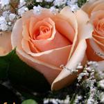 الورد جميل وبس للناس الحلوين :-)