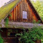 منزل جميل في الغــابة الســـوداء .