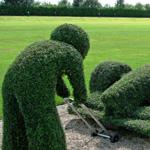لوحة فنيه من العشب الأخضر