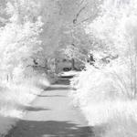 تساقط الثلوج يجمع اغصان هذا الغابة معا
