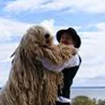 كلب كوموندور - هو من كلاب الرعي يتميز بشعر كثيف وطويل.