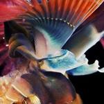 من عجائب الحياة البحرية