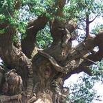 شجرة صناعية تعتبر رمز المملكة بولاية فلوريدا