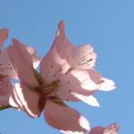 ما أجمل الربيع وجوه البديع ! تغرد الطيــــــور وترقص الزهور