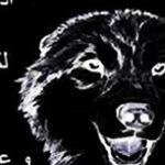حكمة ذئب رائعة