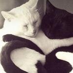 قطط جميلة ولطيفة في وضع رومانسي