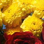 الورد هو الحياة .. يحمل العديد من الل...