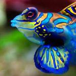 سمكة تتميز بالوانها الجميلة