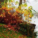 اهلا وسهلا بفصل الخريف