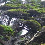 شجرة متشبثة بالحياة