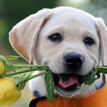 بتقبلو مني هاي الوردة؟