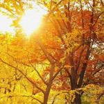 وهاي أجا فصل الخريف