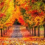 لوحة رائعة من فصل الخريف