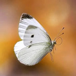 ما اجمل وارق الفراشات