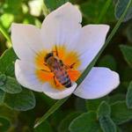 خذ من النحل ثلاثا: الشموخ والعزة ونفع...