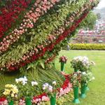نهديكم أجمل الورود :)