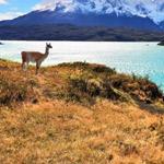 بحيرة بيهوي- تشيلي