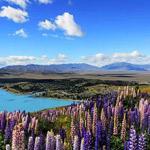 بحيرة تيكابو- في نيوزيلاندا