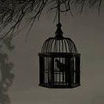الطيور التي تولد في القفص تعتقد ان ال...